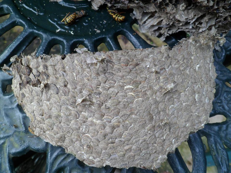 Wasp nest - top side of layer